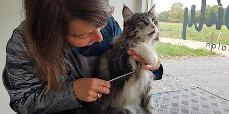 Webinar: Een klitvrije kat, zo doe je dat: verzorging voor een prachtvacht tickets