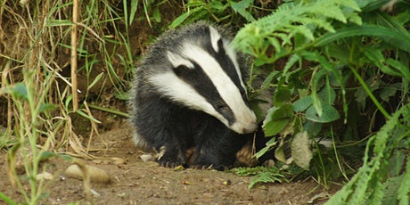 Scottish Badgers' Virtual Conference, Saturday 10th October 2020 tickets