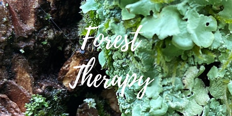 Forest Therapy tickets