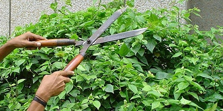 Pruning Solutions (webinar) tickets
