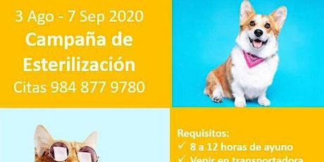 Campaña de Esterilización para Perros y Gatos 2020 boletos