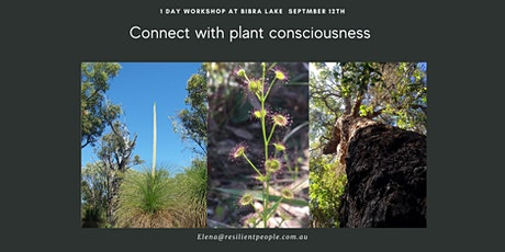 Connect with Plant Consciousness tickets