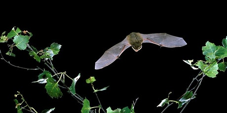 Bat Walk at Great Lines Heritage Park tickets