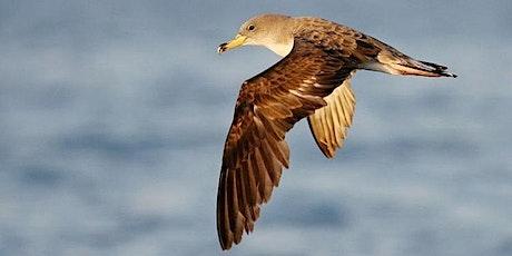Observer & Connaître : les oiseaux marins des Calanques billets