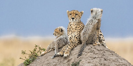 Remembering Cheetahs book launch tickets