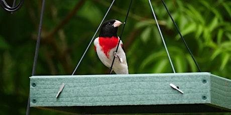 Birding Basics @ Hilltop Arboretum tickets