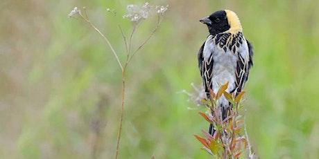 Ganondagan State Historic Site - Birding Field Trip tickets
