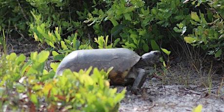 Wild Sarasota: Gopher Tortoise (webinar) tickets