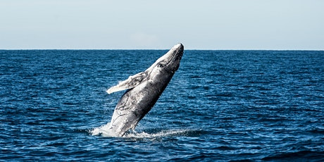 Abrolhos Adventures Whale Watching Cruise tickets