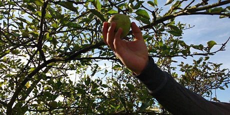 Apple Harvest at Bethlem Royal Hospital - 6th October (London) tickets