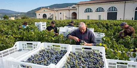 Superiore, Ripasso, Amarone: The Wines of Valpolicella tickets