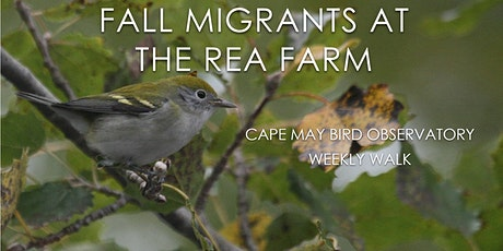 Fall Migrants at the Rea Farm tickets