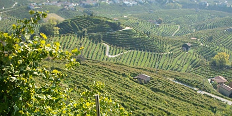 Prosecco is Not Italian Champagne: Virtual Tasting tickets
