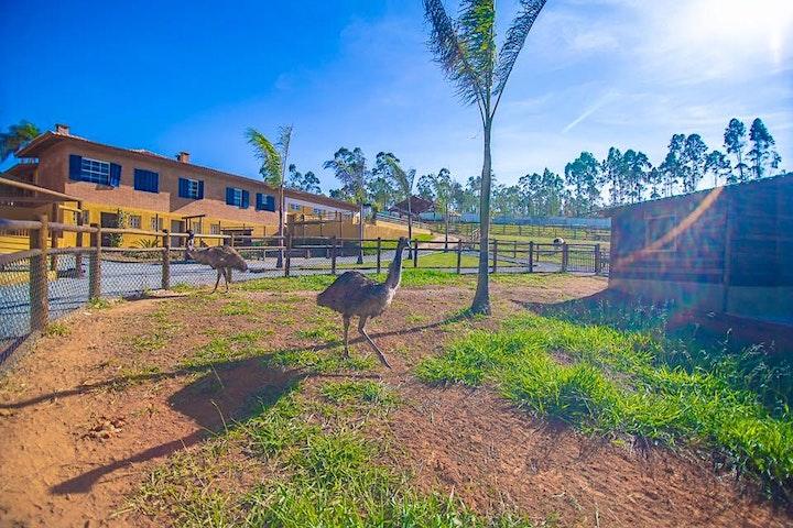 Imagem do evento Desconto para Fazendinha Pet Zoo, em Cotia
