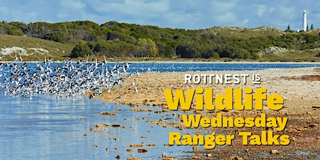Quokka Birthday: Wildlife Wednesday Ranger Talks tickets