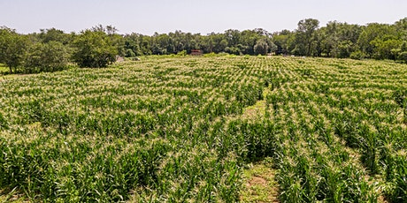 The Amazing Maize Maze® sponsored by Con Edison tickets