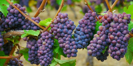 Unusual Grape Varietals from Around the World tickets