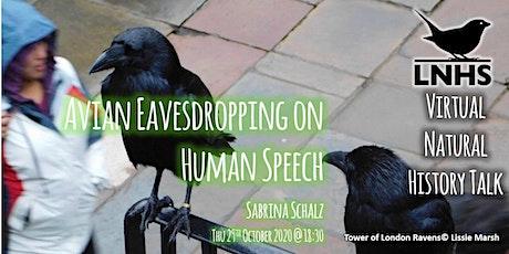 Avian Eavesdropping on Human Speech by Sabrina Schalz