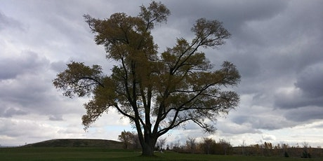Downsview Park's A Walk in the Park: Wonderful World of Seeds and Trees boletos