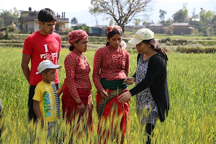 Borlaug Global Rust Initiative Technical Workshop 2020 image