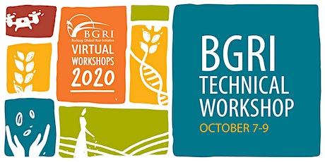 Borlaug Global Rust Initiative Technical Workshop 2020 tickets