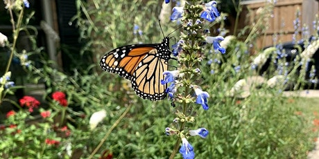 Butterfly Gardening in North Florida tickets