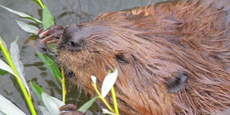 Managing Vegetation for Beaver tickets