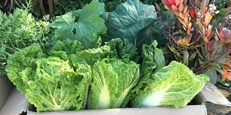 Grow Your Own Food in October tickets
