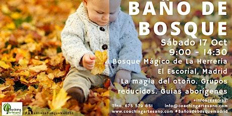 Baño de Bosque sábado 17 Oct - Otoño Bosque La Herrería El Escorial entradas