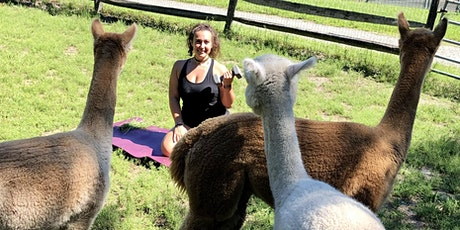 Bootcamp at the Alpaca Farm tickets