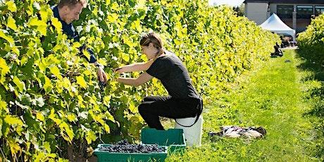 Journée de vendanges au Vignoble Rivière du Chêne billets