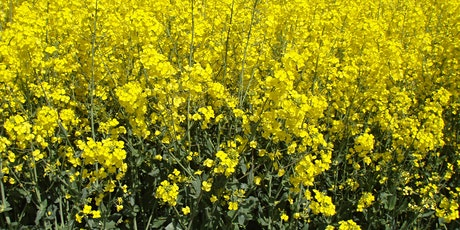 "SCottish Organic CANola (SCOCAN) ""Virtual"" Event tickets"