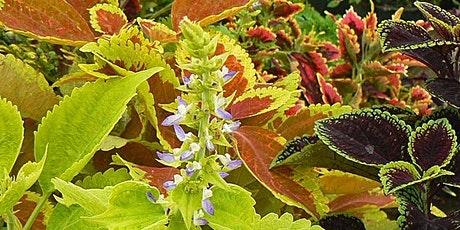 Colorful Fall Plants  - Zoom Virtual Class tickets