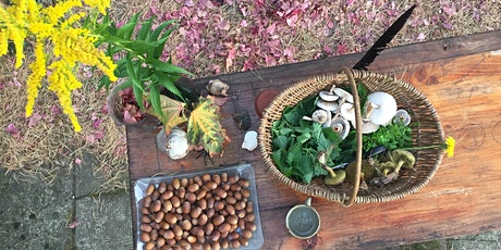 Autumn Foraging Edible Weeds & Forest Medicine Tickets