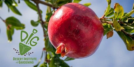 DIG ONLINE:  Fruit Trees for Backyard Gardeners in the Low Desert tickets