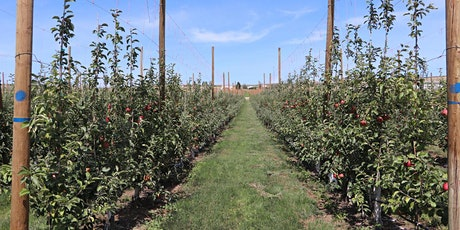 Field Visit:  Alternatives to Fumigation for Replant Disease: Tonasket tickets