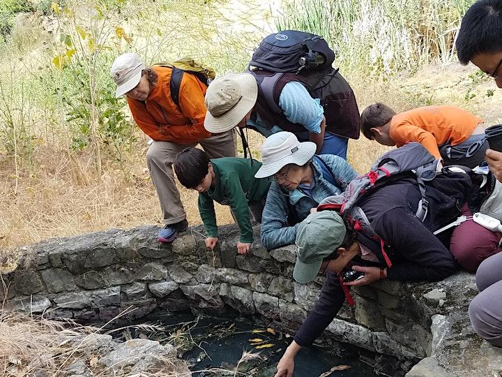 BioBlitz on The Los Gatos Creek image