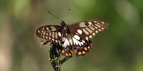 Bush Explorers - 'Spring into Nature' - Bug-hunt - Simmo's Beach Reserve tickets