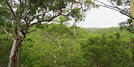 Bush Explorers - 'Spring into Nature - Serenity Stroll' - Scattergood tickets