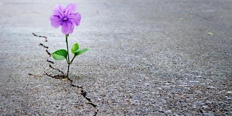 Resiliencia - La clave para ser más fuertes entradas