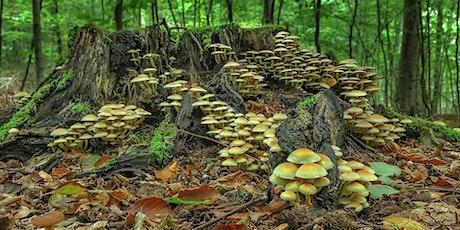 The Magic of Mushrooms tickets