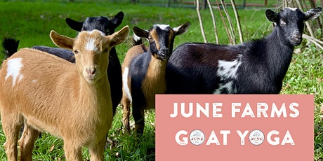 Weeknight Goat Yoga at June Farms! tickets