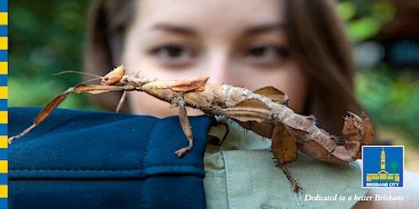 Bush Buddies – Biodiversity Walk tickets