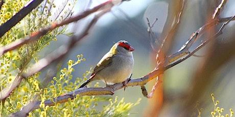 Small Bird Habitat Bushcare Mornings Chanel St tickets