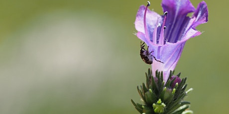 Biological control - a powerful weed management tool explained tickets