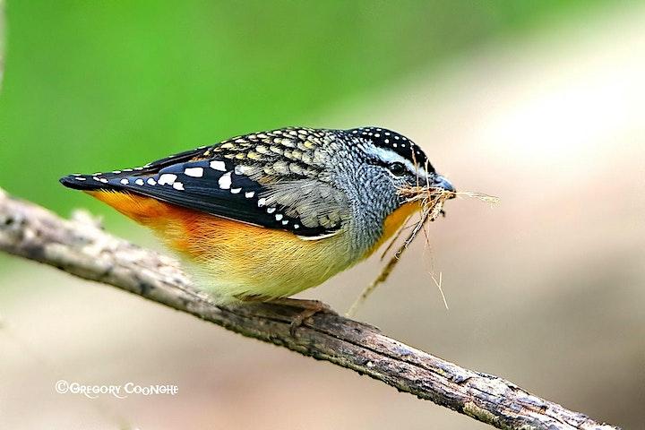 Small Bird Habitat Bushcare Mornings Picasso image