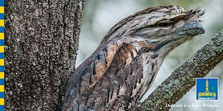 Aussie Backyard Bird Count Guided Walk tickets