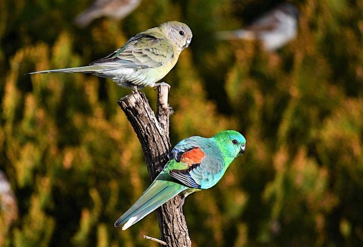 Small Bird Habitat Bushcare Mornings Chanel St image