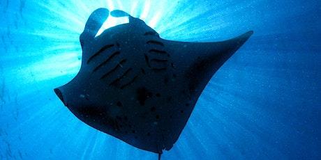 Marine Life of Sri Lanka - Manta and Mobula Rays tickets