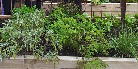 Green Living online: Propagating and using herbs lunchtime webinar tickets